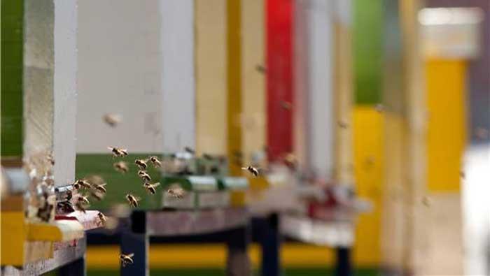 Masovno uginuće pčela u Međimurskoj županiji istražuju veterinari i forenzičari