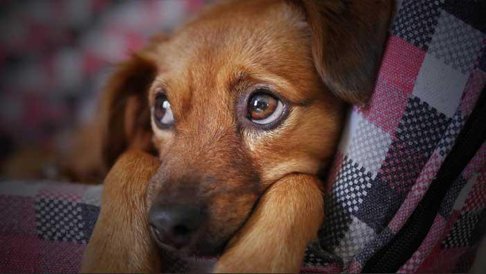 Stigla prva presuda u Hrvatskoj za zlostavljanje životinja
