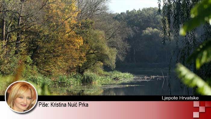 Spačvanska šuma: '...dok mu bura hrašće vije...' | Domoljubni portal CM | Kultura | Ljepote Hrvatske
