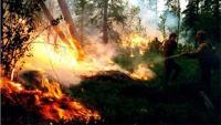 Više od 6000 šumskih požara u Rusiji